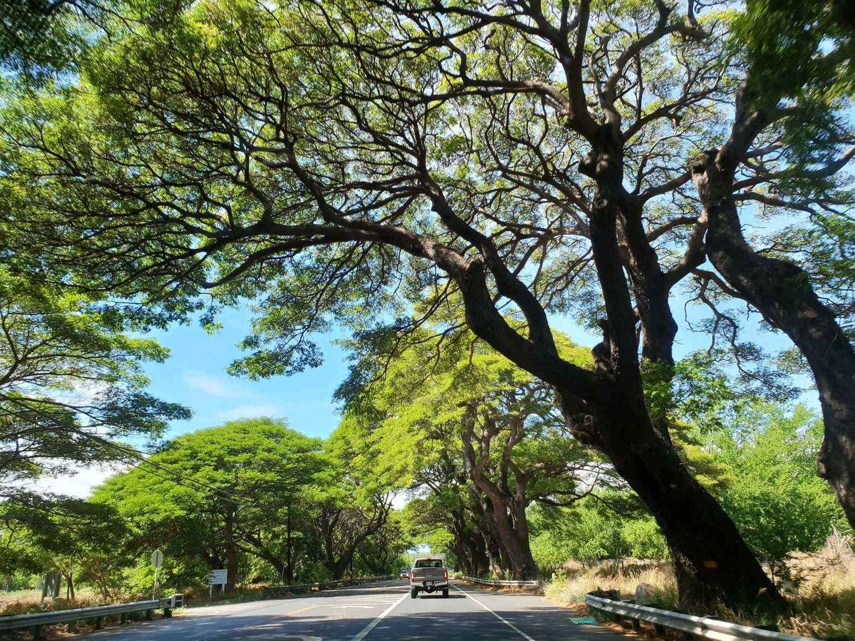 【夏威夷-Maui】茂宜島行程規劃景點安排,八天七夜歐胡、茂宜雙島親子遊
